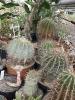 Z wizytą w kaktusiarni w Rumi 2019-02-23  fot. Marta Polak